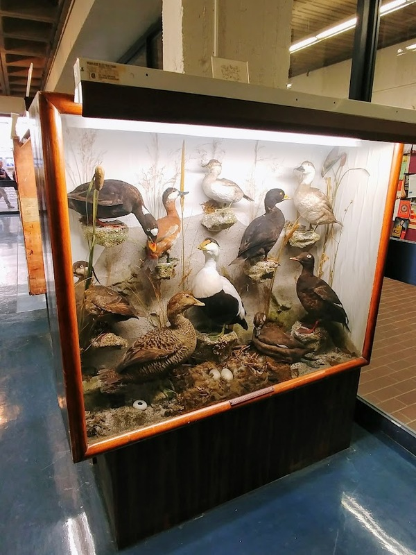 Photograph of a display case in the Thomas McCulloch Museum